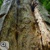 Fraßspuren in totem Holz