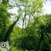 Strukturreicher Waldrand